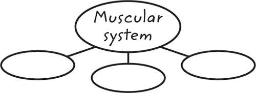 Example of a graphic organizer with the center oval labelend Muscular System and three blank ovals branching off below it
